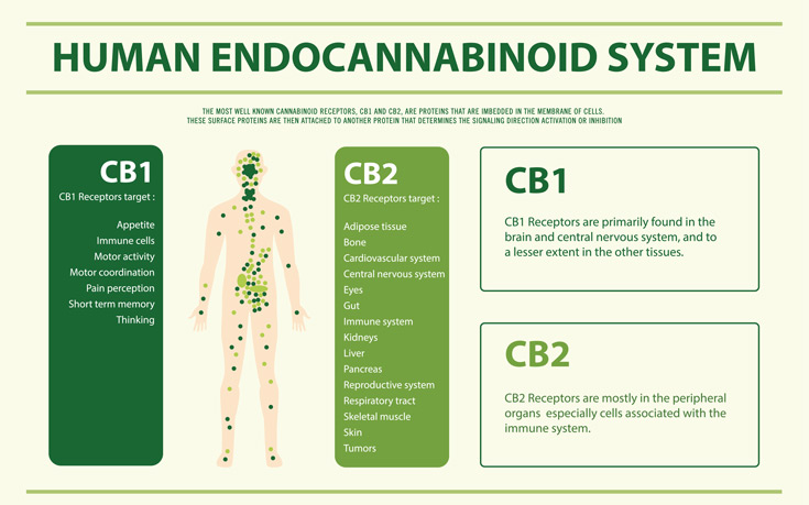 Get in touch with your Endocannabinoid System